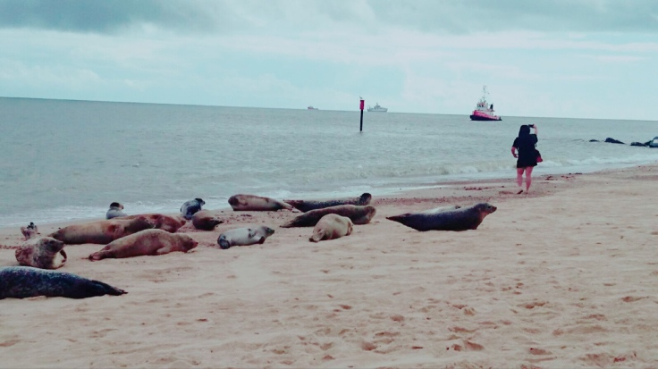 More Seal-fies, Horsey Beach, Norfolk coastal Road Trip