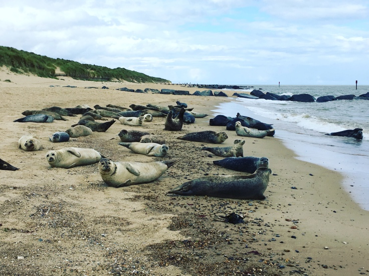 Blubbery Seals, Horsey Beach, Norfolk coastal Road Trip